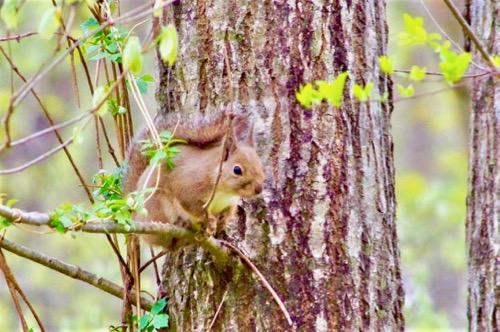 『ピクニックの森』通信vol.4 「いのちをつなぐこと」