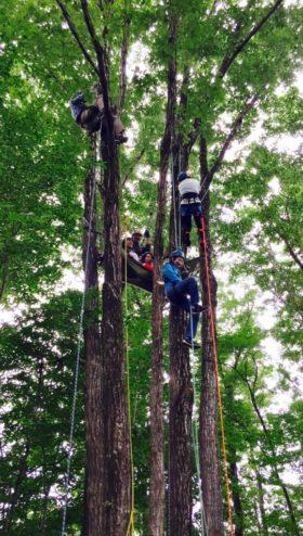 『ピクニックの森』通信vol.3 「事業ドメインについて」