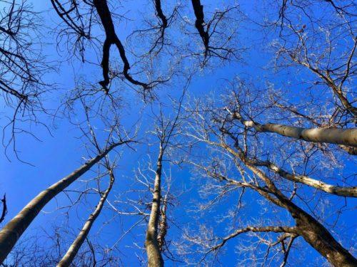 『ピクニックの森』通信vol.5 「健やかで、美しい森をつくること」